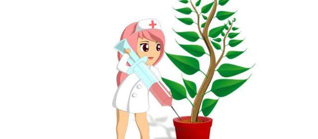 BILJKE POD ANESTEZIJOM: Nešto fascinantno se događa kada biljkama damo anestetik